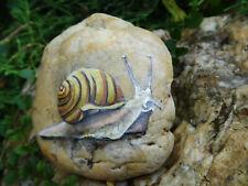 Schnecke ( 2), snail,  Stein bemalt,Garten, Terrasse, Balkon,Geschenk