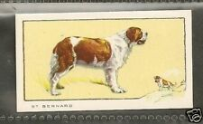 Rare 1934 UK Dog Art Full Body Study Gallaher Cigarette Card ST. SAINT BERNARD
