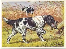 1952 Dog Art Print Austria Tobacco Company Bildwerk Card Large B/W Munsterlander