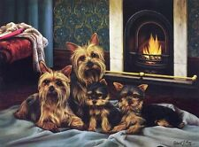 Yorkshire Terrier Print by Robert J. May