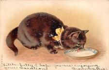 CAT LICKING MILK FROM CHINA BOWL BUFFALO NEW YORK POSTCARD 1907