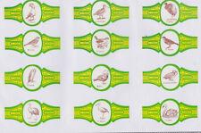 Série Bagues de Cigare  F. Taco BN78195 Canaries Oiseaux