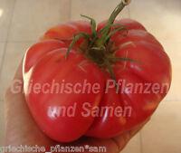 🔥 🍅 Goliath Tomate Italien*Riesen-Fleisch-Tomaten*10 Samen