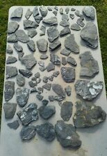 Lot of 80+ Fern Fossils - Small Branches - St. Clair, Pennsylvania Freshly Dug
