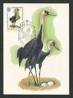 RUSSIA MK FAUNA VÖGEL BIRDS OISEAUX MAXIMUMKARTE CARTE MAXIMUM CARD MC CM d246