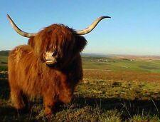 Lindo highland Cow-Premuim Calidad Mouse mat/pad - # 4