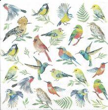 Lot de 4 Serviettes en papier Oiseaux Colorés Decoupage Collage Decopatch