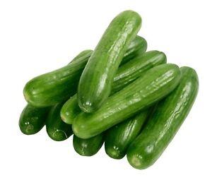 Cucumber Lebanese 20 seeds heirloom Vegetables