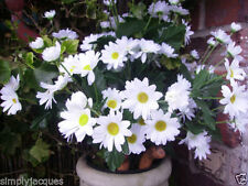 Unbranded Daisy Dried & Artificial Flower Bunches