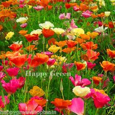 CALIFORNIAN POPPY MIX - 2100 SEEDS - Eschscholzia californica