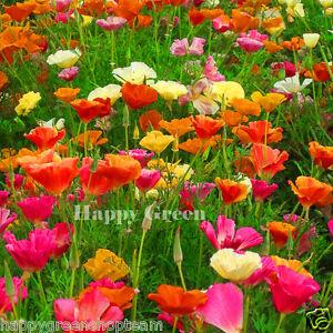 CALIFORNIA POPPY MIX - 2100 SEEDS - Eschscholzia californica - Annual Flower
