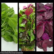 Mix edible asian chinese  tender round leaves amaranth seeds :12000 seeds (10g)