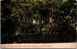 1908 Anderson South Carolina Buena Vista Park Shrubbery Vintage Postcard