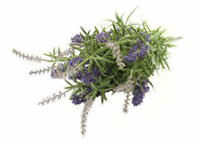 Lavender Outdoors Dried & Artificial Flowers
