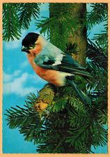 Carte Postale-Gimpel-Bouvreuil Pivoine-Oiseaux-Bird-Germany
