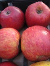 Malus Liberty - Apfel Liberty