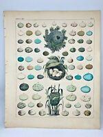 Antique large hand-colored print 1843.Oken's Naturgeschichte Plate 1 Nests Eggs