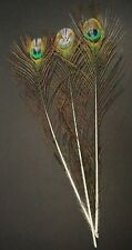 "New listing Three ~20"" Cut Pied Peacock Eye Sticks Fly Tying/Feather Arts Lot-Sf 431"