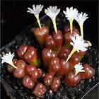 Fun 60PCS Seeds Mixed Succulents Seeds Rare Succulent Potted Plant Home Decor SX