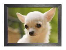Chiwawa Poster Beautiful Little Puppy Sweet Cute Animal Photo Best Friend Nature