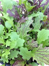 Vegetable - Mustard Mixed Baby Leaf - 1000 Seeds - 1st Class - Microgreen Salad