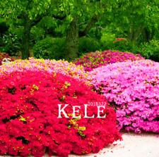 100 Pcs Seeds Japanese Azalea Flowers Plants Tree Bonsai Home Garden 2019 Rare N