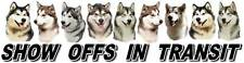 Alaskan Malamute Show off Dog Car Sticker by Starprint