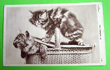 Cat Unposted Pre - 1914 Collectable Postcards