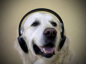 MUSIC TO CALM & SOOTH YOUR DOG OR CAT CD, STOP DESTRUCTIVE BEHAVIOUR