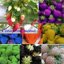 1600 Seeds Sweet Strawberry Potted Plant Everbearing Vegetable Fruit Seeds