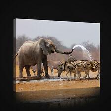 CANVAS WANDBILD LEINWANDBILD AFRIKA TIER ZEBRA NATUR ELEFANT WASSER 3FX2599O4