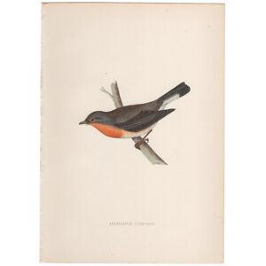 Morris Birds antique 1870 hand-colored engraving bird print 45 Red Flycatcher