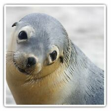 2 x Square Stickers 7.5 cm - Young Seal Ocean Marine Animals Cool Gift #16916