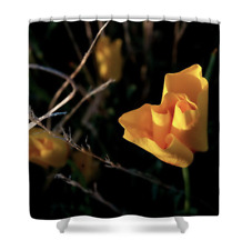 Desert Yellow Shower Curtain