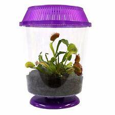 Live Adult Venus Flytrap in Terrarium - Carnivorous Plant Fly Trap