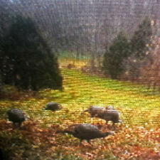 2021 Turkey Hunt - 3 Days - Opening Days - Western Kentucky - Licensed Outfitter