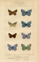 Framed Print - Antique Butterflies (Victorian Picture Sea Life Ocean Animal Art)