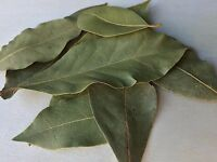 Bay Leaf, Laurus nobilis WHOLE ~ Sacred Herbs and Spices from Schmerbals Herbals