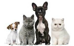 good_life_pet_products