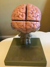 Antique Somso Brain Model BS 25