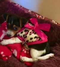 Tea Cup Chihuahua XXS Size Cosy Fleece Leopard top & Pink Bow Pet Dog Clothes