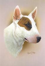 Robert J. May Head Study - Bull Terrier (RMDH029)