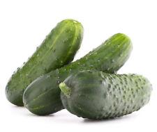 """Concombre """"Krak"""" - pour les cornichons  - graines"""