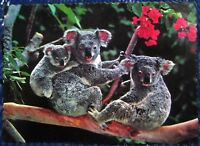 Postcard Animal Koalas - posted