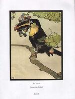 Beau Vintage Oiseau Imprimé ~The Toucan~ Photos De Birdland Detmold