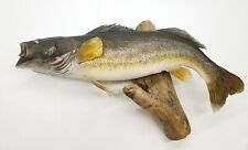 "Vintage 27"" Professionally Mounted Taxidermy Large Mouth Bass Fish Wall Mount"