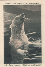 46. Ours blanc Polaire Ursus maritimus Polar bear IMAGE CARD BON POINT 30s