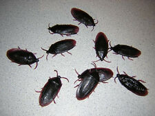 24-Fake Roaches Prank Novelty Cockroach Bugs Look Real