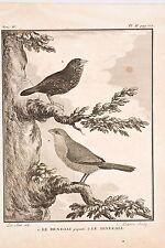 Histoire Naturelle Oiseaux Buffon v 1780C.Baron-De Sève Bengali Senegali