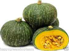 KABOCHA - JAPANESE SQUASH - 15  SEEDS - PUMPKIN SEEDS - delicious vegetable